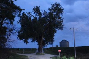 Tree in the Road: Brayton, IA
